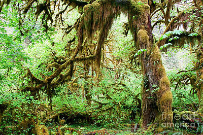 Photograph - Ho Rain Forest by Frank Townsley
