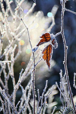 Photograph - Hoar Frost And Leaves In Winter by Peggy Collins