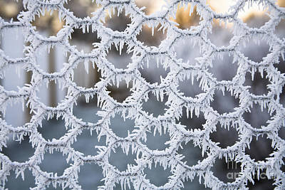 Photograph - Hoar Frost by Diane Macdonald