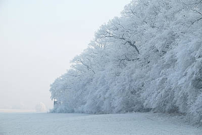 Photograph - Hoar Frost Forest by Martin Stankewitz
