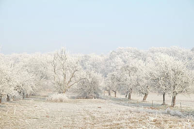 Photograph - Hoar Frost On Fruit Trees, Winter Landscape by Martin Stankewitz
