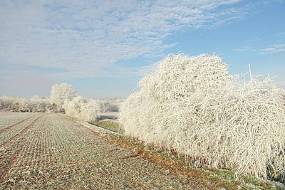 Photograph - Hoar Frost On Hedges And Trees Winter Landscape by Martin Stankewitz