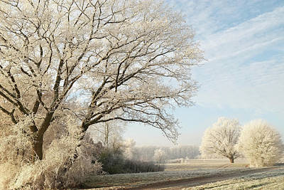 Photograph - Hoar Frost Winter Landscape With Trees by Martin Stankewitz