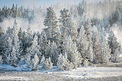 Photograph - Hoarfrost Covered Forest - Yellowstone by Stuart Litoff