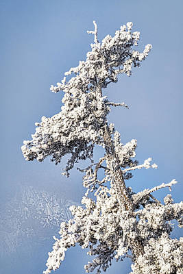 Photograph - Hoarfrost Covered Tree - Yellowstone by Stuart Litoff