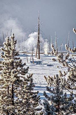 Photograph - Hoarfrost Evergreens And Dead Trees - Yellowstone by Stuart Litoff