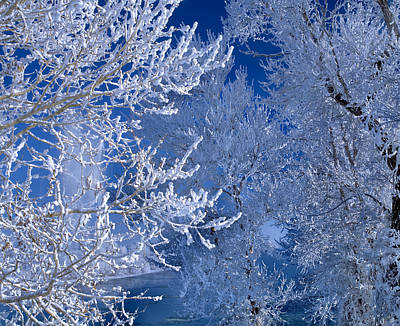 Photograph - Hoarfrost by Leland D Howard