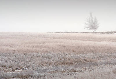 Hoarfrost Pasture Print by Fred Lassmann