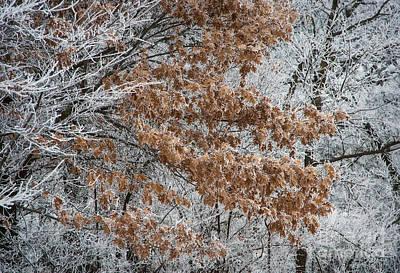 Hoarfrost Trees Art Print by Fred Lassmann