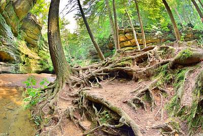 Photograph - Hocking Hills Ohio Old Man's Gorge Trail by Lisa Wooten