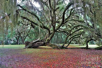 Photograph - Hofwyl-broadfield Plantation2 by Merle Grenz