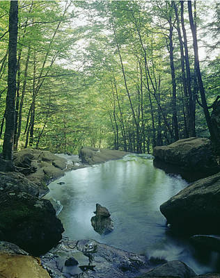 Photograph - 143410-hog Camp Creek  by Ed  Cooper Photography