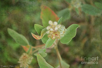Photograph - Hogwort Plant In Bloom by Debbie Portwood