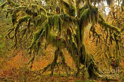 Photograph - Hoh Glowing Moss by Adam Jewell