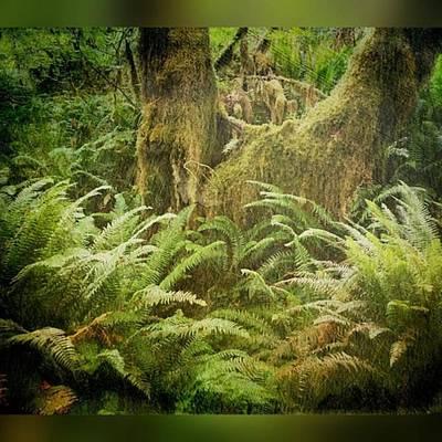 Hoh Rain Forest On The Olympic Art Print
