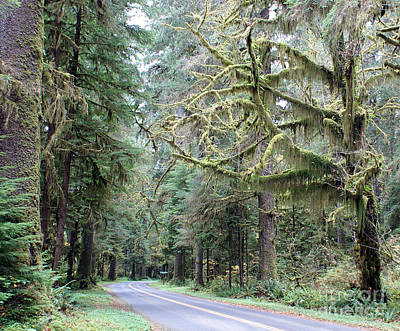 Hoh Rain Forest Road Art Print