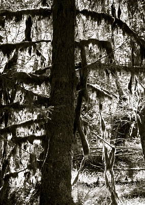 Hoh Rain Forest Art Print by Sonja Anderson