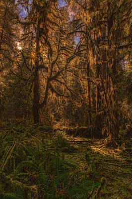 Photograph - Hoh Rain Forest by Thomas Hall