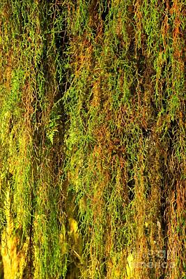 Photograph - Hoh Rainforest Abstract by Adam Jewell