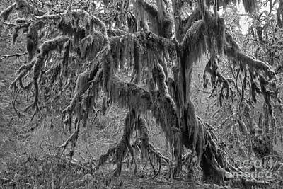 Photograph - Hoh Rainforest Black And White by Adam Jewell