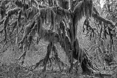 Photograph - Hoh Rainforest Tree Black And White by Adam Jewell