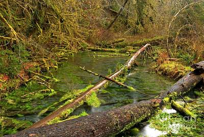 Photograph - Hoh River by Adam Jewell