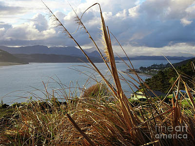 Photograph - Hokianga by Angela DeFrias