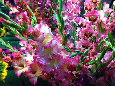 Photograph - Holbrook Gladiolas by Polly Castor
