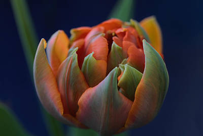 Photograph - Hold Tight The Rainbow by Connie Handscomb