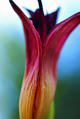 Photograph - Hold Tightly- Vertical by Michiale Schneider