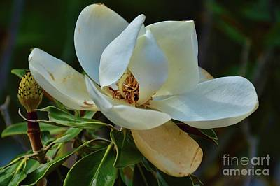 Photograph - Holding Hands by Diana Mary Sharpton
