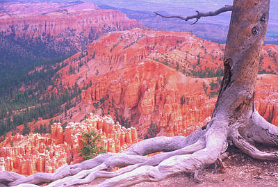 Tree Roots Photograph - Holding On by Dave Hampton Photography
