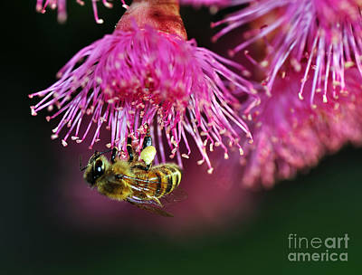 Bee On Flower Photograph - Holding On by Kaye Menner
