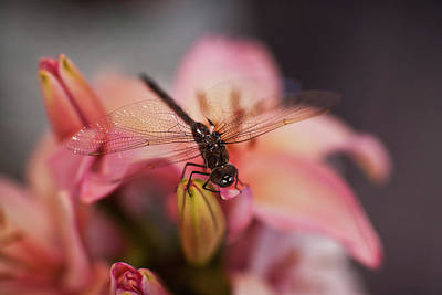 Macro Dragonfly Photograph - Holding On by Mike Reid
