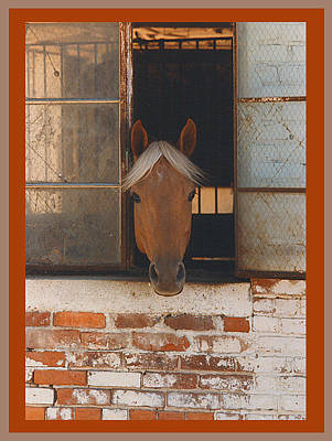 Keith Richards - Horse In Still Life by Shirley Anderson