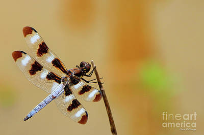 Photograph - Holding Fast Dragonfly Farm Pond Art by Reid Callaway