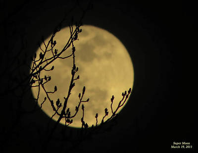 Photograph - Holding Up The Super Moon by Sandi OReilly