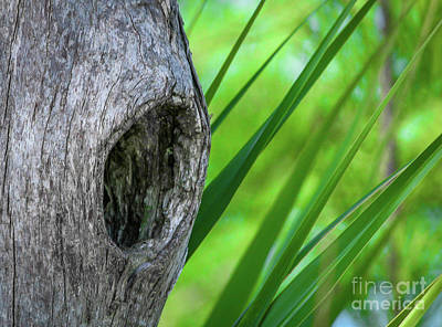 Photograph - Hole In Tree by Tom Claud