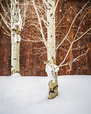 Photograph - Holiday Aspens by Elena E Giorgi