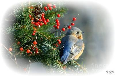 Photograph - Holiday Blue Bird by Barbara S Nickerson