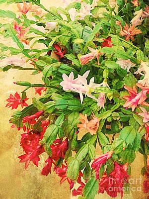 Winter Blooming Houseplant Photograph - Holiday Christmas Cactus by Vizual Studio