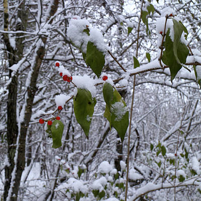 Photograph - Holiday Colors by Scott Kingery