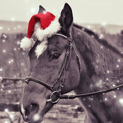 Photograph - Holiday Horse by JAMART Photography