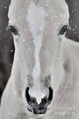 Photograph - Holiday Horse by Jim And Emily Bush