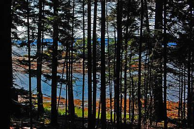 Holiday Ledges Island Through Pines Original
