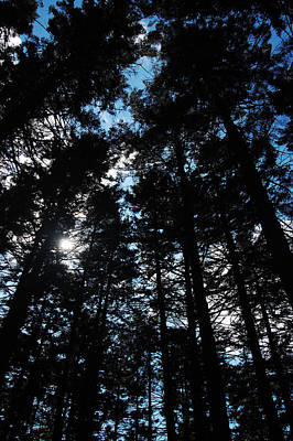 Holiday Ledges Pines Original