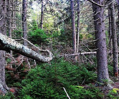 Holiday Ledges Woods Original
