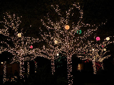 Photograph - Holiday Lights by Rose  Hill