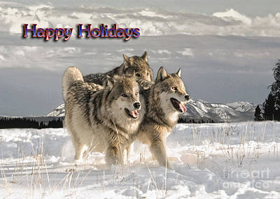 Wolf Photograph - Holiday Pack by Wildlife Fine Art