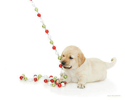 Photograph - Holiday Puppy Playtime II by Kelly Richardson